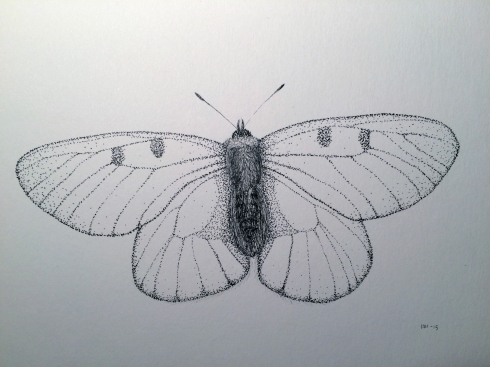 Rødlistet 4 (Mnemosynesommerfugl)